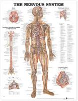 Nervous System Anatomical Chart 6th