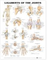 Ligaments of the Joints Anatomical Chart New edition